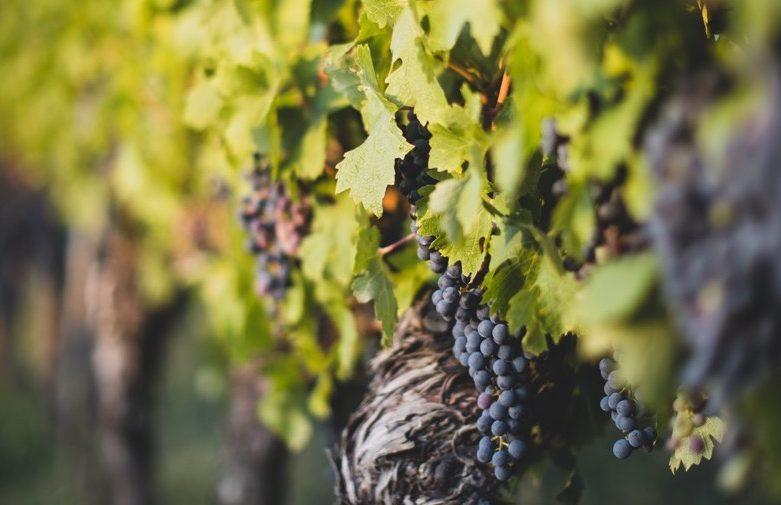 """Webinaire : """"La relance des entreprises viticoles en 2021"""""""
